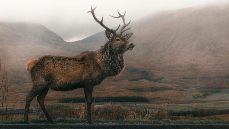 Elk Jewelry Photo